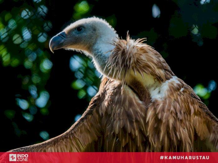 Ini Alasan Burung Hering Tak Pernah Keracunan Meski Memangsa Bangkai Indozone Id