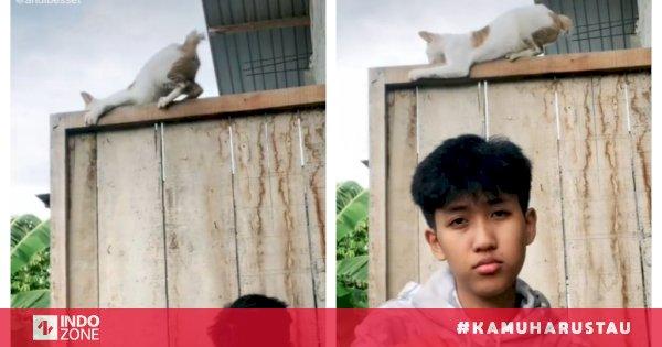 Kucing Ini Mencengkram Erat Usai Digoyang Pemuda Di Tiktok Netizen Awas Bales Dendam Indozone Id