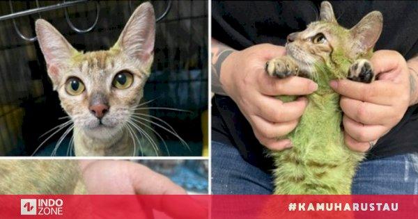 Kucing Malang Ini Tewas Setelah Pemiliknya Mewarnai Bulunya Indozone Id